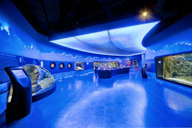 آکواریوم فلوریا در استانبول بزرگ ترین آکواریوم شبیه سازی شده جهان