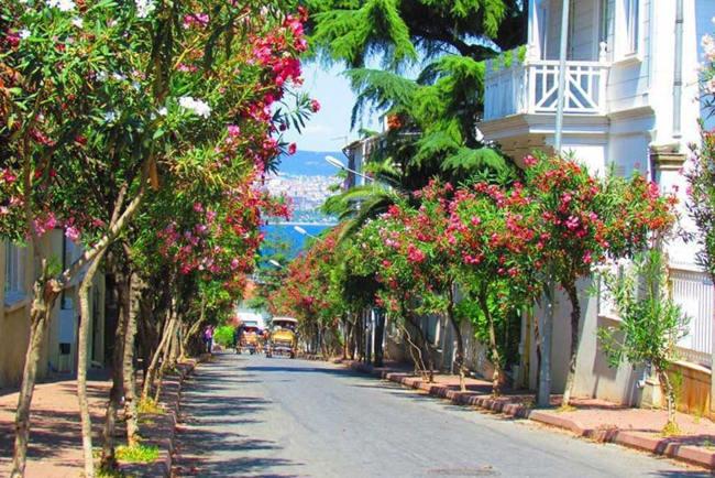 جزیره بیوک آدا Buyukada استانبول بزرگترین جزیره جزایر 9 گانه پرنس
