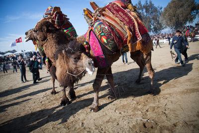زمستانی بینظیر در فستیوال زمستانی کوش آداسی