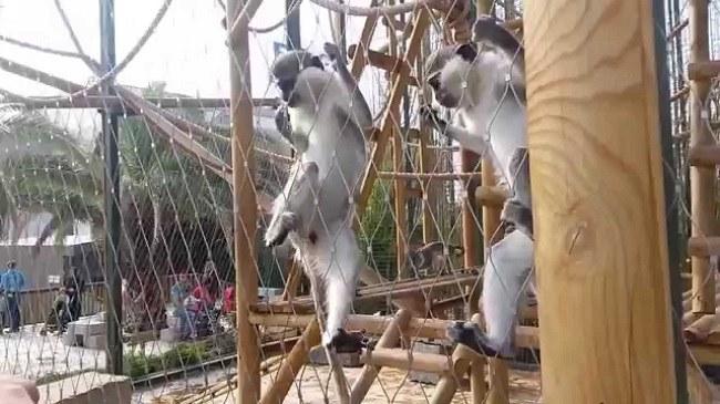 باغ وحش بسفروس استانبول ، بهترین و معتبرترین باغ وحش های استانبول