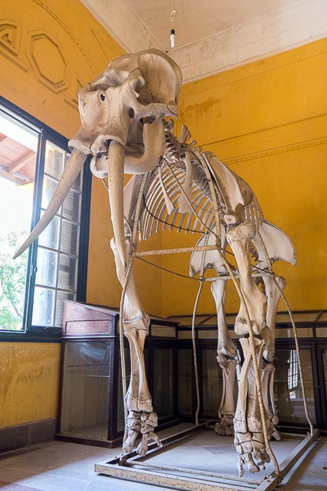 موزه جانورشناسی استانبول، مکانی عالی برای بازدید از تاریخ طبیعت ترکیه