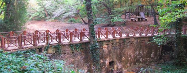 سفر به دل جنگلهای استانبول در پارک ملی بنتلر استانبول bentler