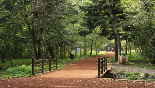 پارک جنگلی نشت سویو استانبول Neşet Suyu Nature Park جلوگاه طبیعت زیبای استانبول